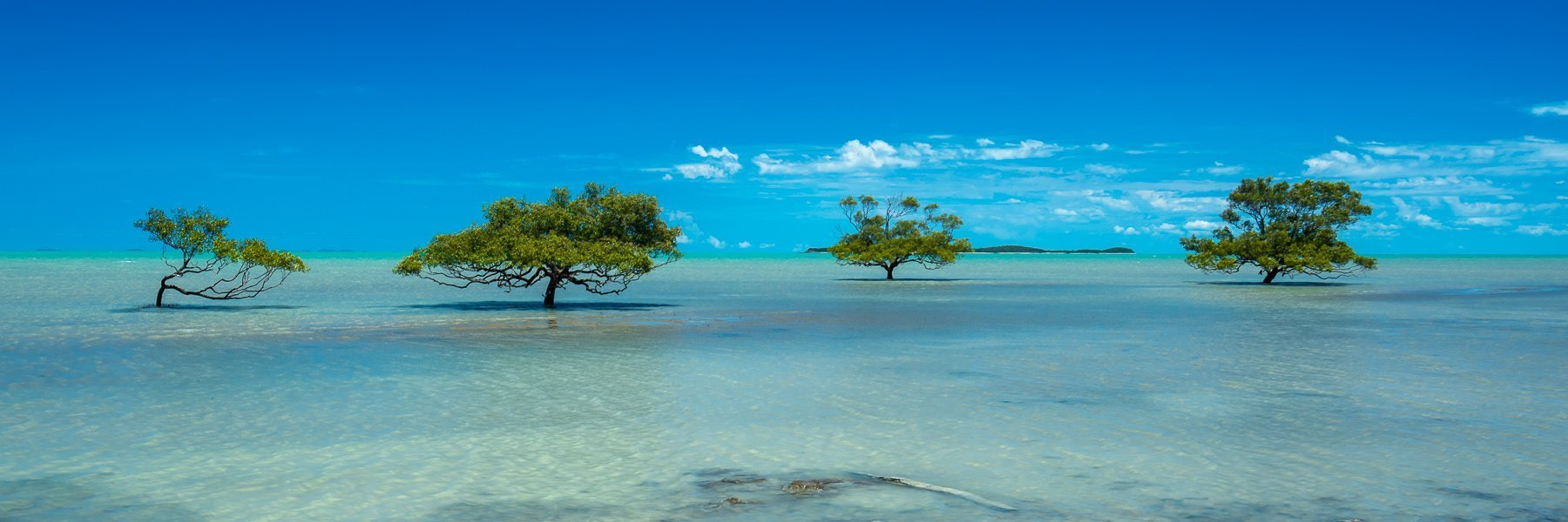 Four trees in shallow water with aqua blue ocean and cloudy blue sky behind
