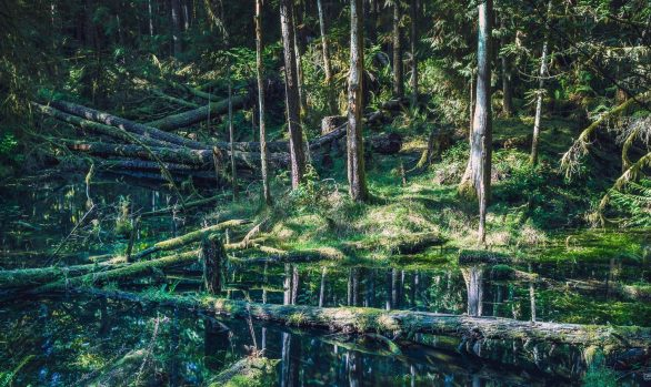 Forest with fallen trees in pool of water